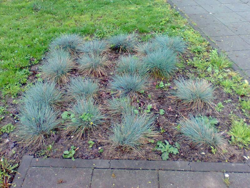 Vrtne biljke                        Image025