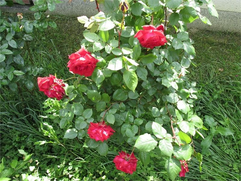 Vrtne biljke                        Img03210