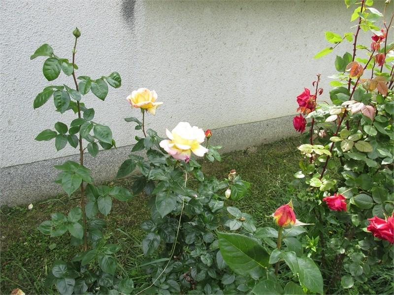 Vrtne biljke                        Img03211