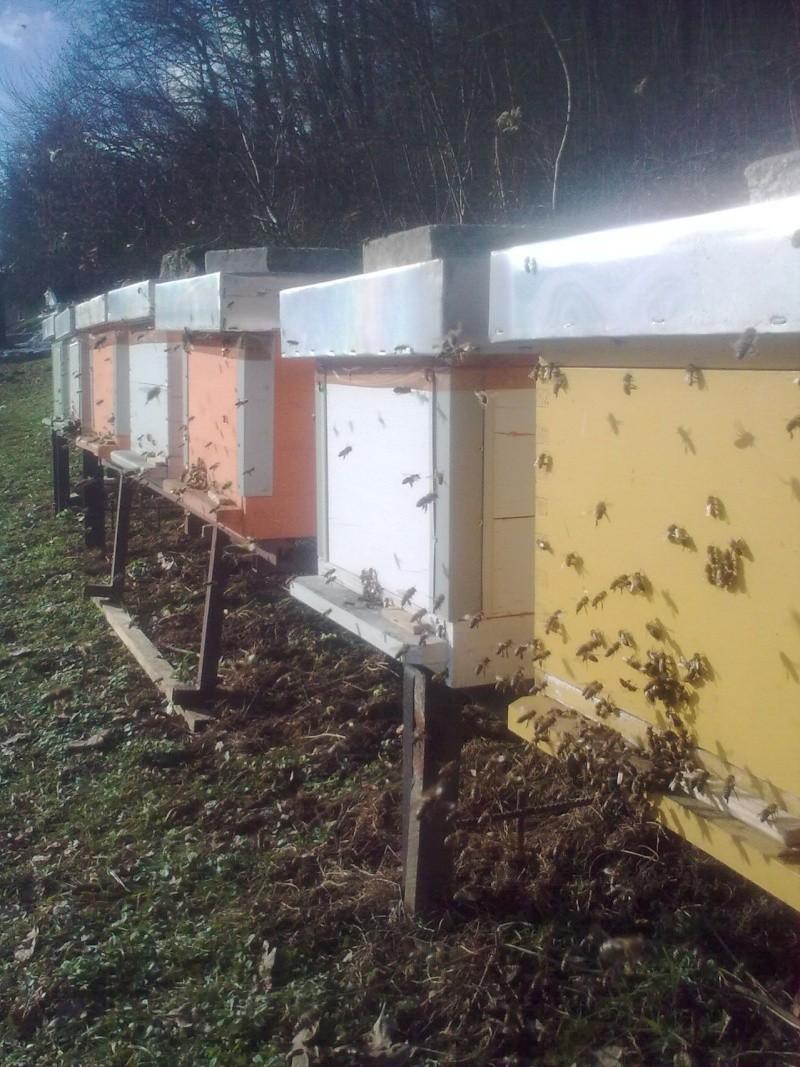 Pčelarstvo     - Page 2 Slika012