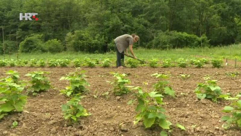 Ruralni i agrarni egzodus Vlcsna11