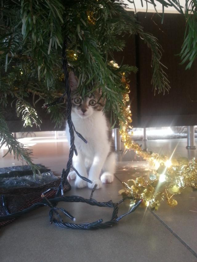 Noël et vos animaux 20151210