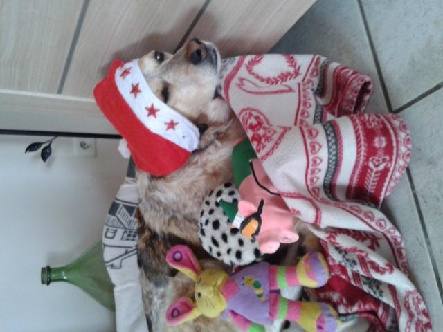 Noël et vos animaux 20160110