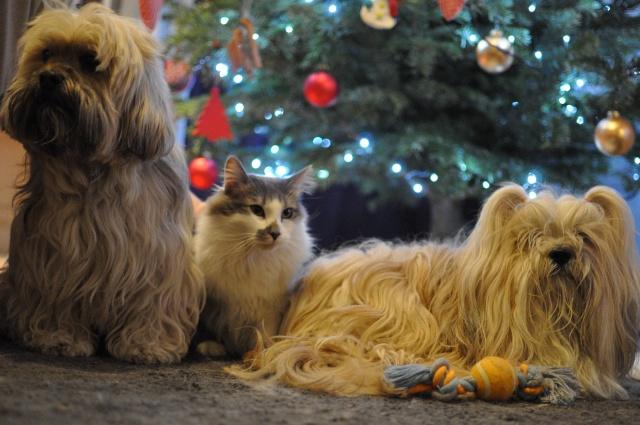 """A DEPARTAGER POUR """" Noël avec vos animaux """" Dsc_9211"""