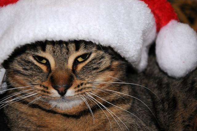 """A DEPARTAGER POUR """" Noël avec vos animaux """" Pga_1511"""