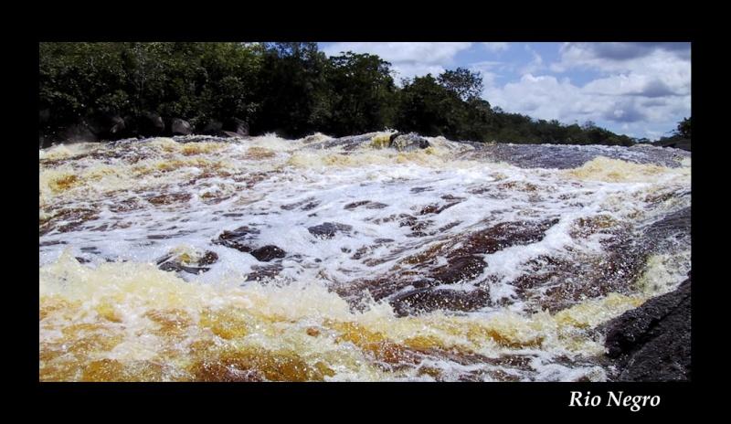 Aquarium 96 L biotope Amazonien Rio Negro - Page 2 Rio_ne10