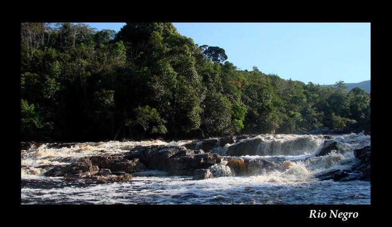 Aquarium 96 L biotope Amazonien Rio Negro - Page 2 Rio_ne13
