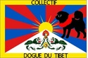Collectif Dogue du Tibet