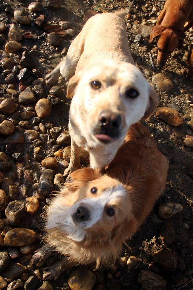 GIACOMO, M-Type labrador, né 2013 (REAA) - Pris en charge Association ANIMALS RESCUE (Belgique) - Page 6 02_20135