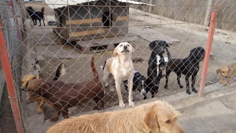 bella - WHITE -  2014 - 10 kg - Un gentil loup - (BELLA)/ URGENT : PEUT ARRIVER ! 19_11_17