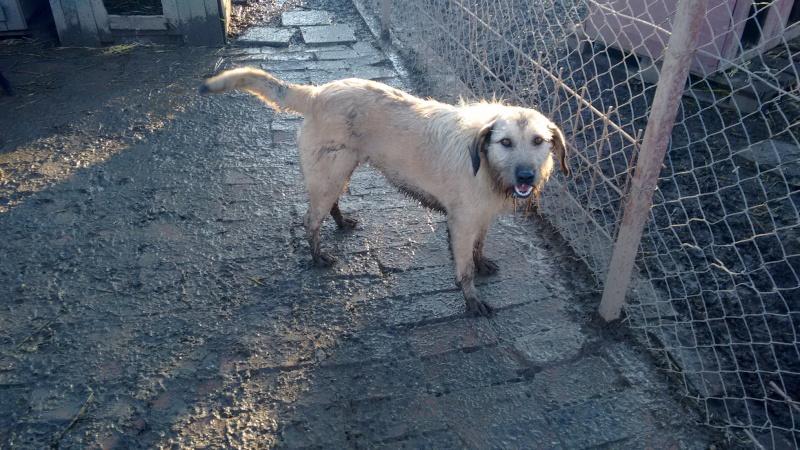 JULIA, F-X, née 2013 - 17 kg - Adorable (BELLA) Prise en charge SPA PONTARLIER 23_12134