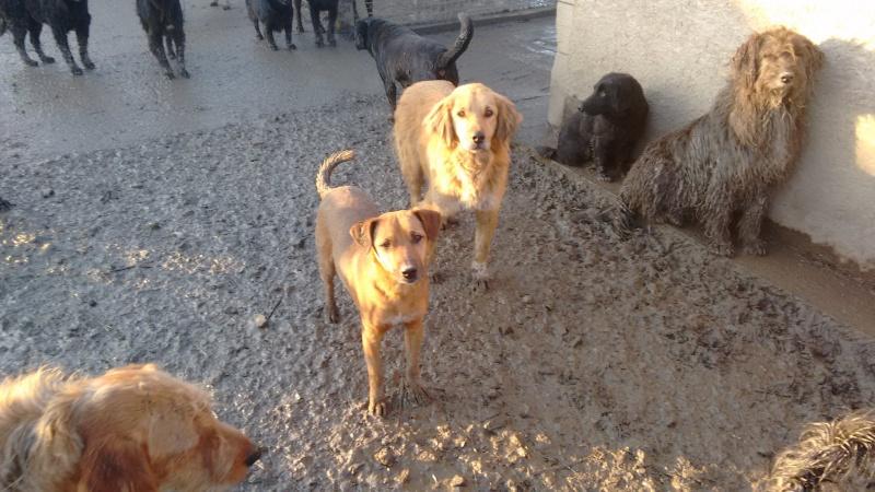 BOUNDASH II, né 2012, 25 kg (BELLA) Pris en charge Association Animals Rescue (Belgique) 23_12_42