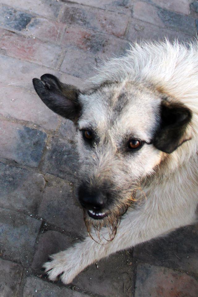JULIA, F-X, née 2013 - 17 kg - Adorable (BELLA) Prise en charge SPA PONTARLIER 25_10_31