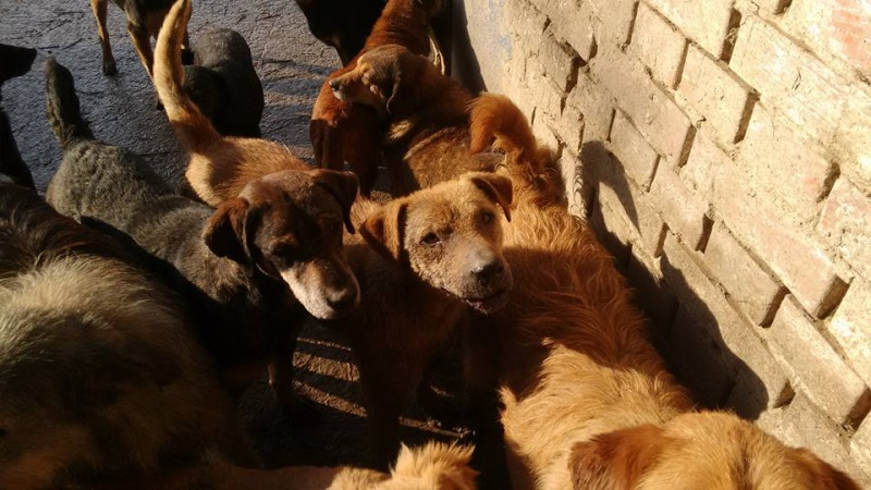 novembre 2020 - INNA - née 2011 - 13 kg - timide et gentille - (BELLA) - PRÊTE EN OCTOBRE 2020 27_01133