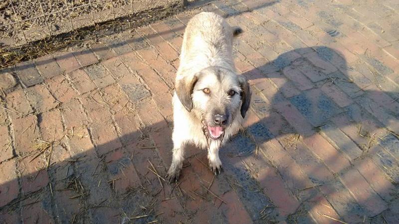 JULIA, F-X, née 2013 - 17 kg - Adorable (BELLA) Prise en charge SPA PONTARLIER 27_01202