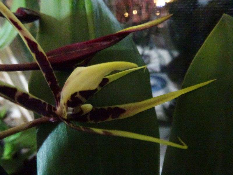 Orchideen in Glasvasen 4 (SGK) - Seite 7 Miltas11