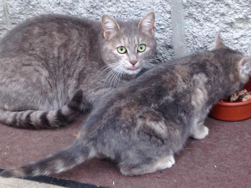 pipelette, jeune chatte gestante Img_0112