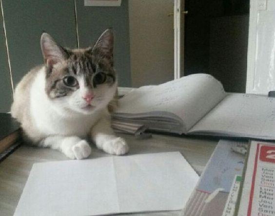 Laïka jeune chatte typée siamoise, gestante, à la rue - Page 2 Img_0210