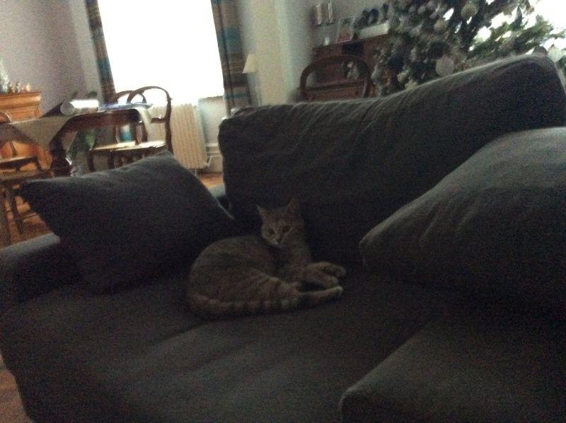 pipelette, jeune chatte gestante Sans-t10
