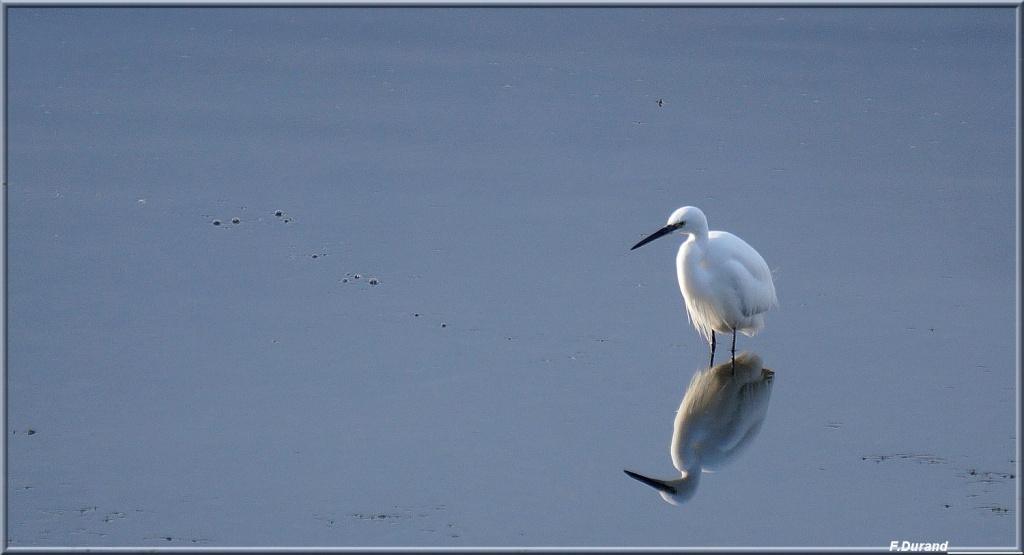 [Ouvert] FIL - Oiseaux. Aigret13