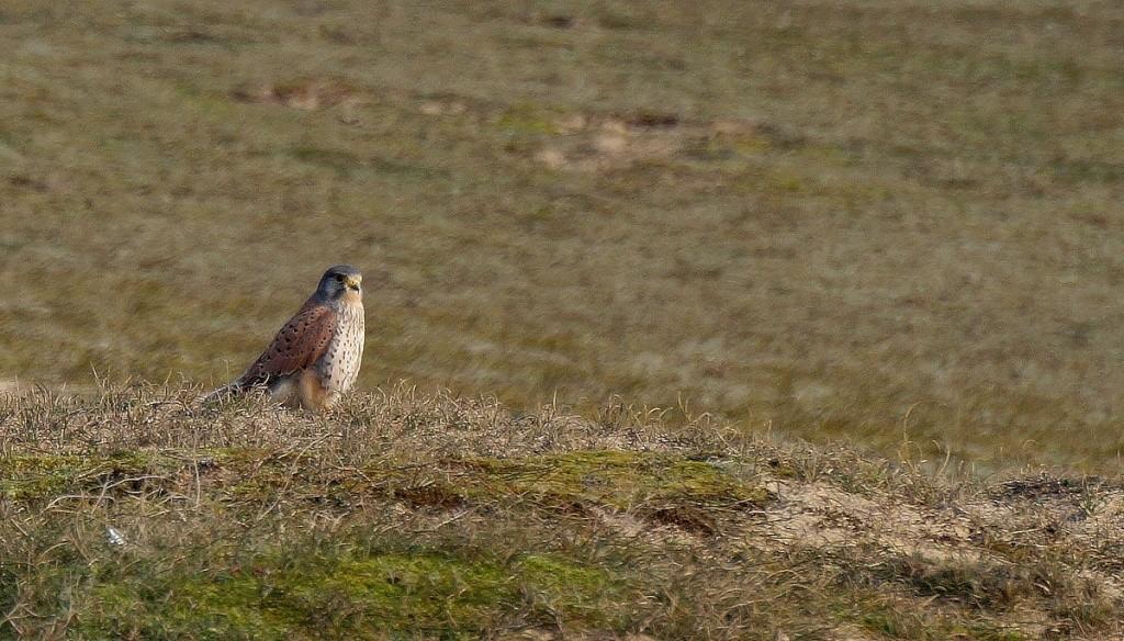 [Ouvert] FIL - Oiseaux. Crecer12