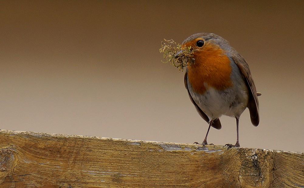 [Ouvert] FIL - Oiseaux. Rg1011