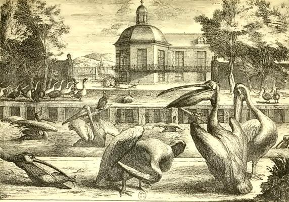 La Ménagerie du château de Versailles Menage12