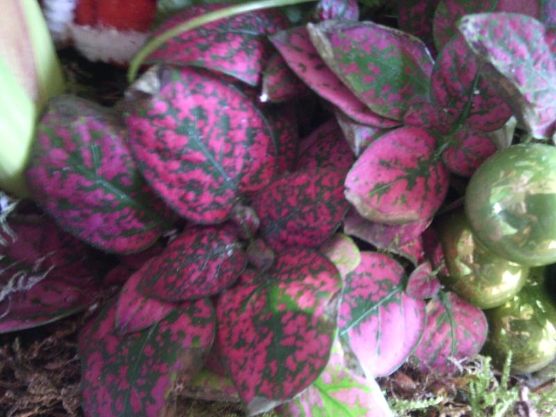 identification plantes vertes [Résolu] Img_2016