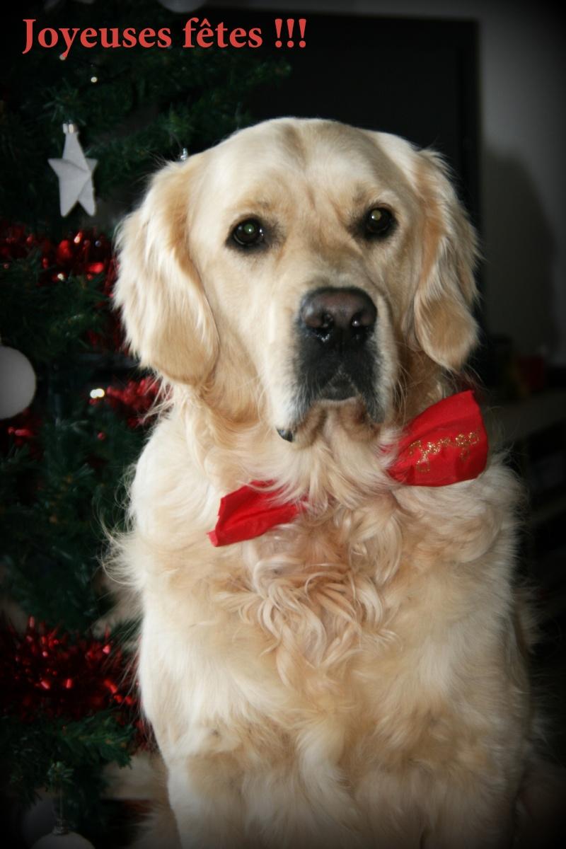 Concours photos de vos chiens, chats à l'occasion des fêtes de fin d'année - Page 2 Img_1910