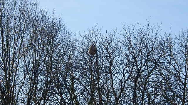 Un nid discret Pb280010