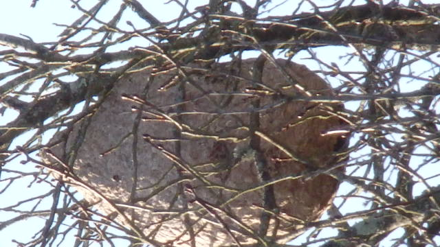 Un nid discret Pb280011
