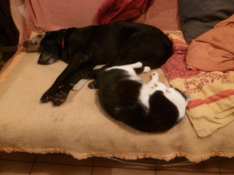Cohabitation chien et chats - Page 11 P1090315