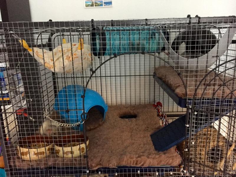 Avis sur l'aménagement de ma cage ! - Page 2 Img_7411