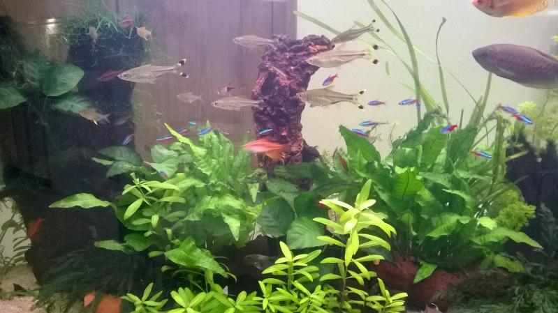 du liège dans un aquarium ? à fermer svp  Wp_20113