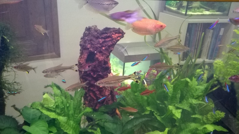 du liège dans un aquarium ? à fermer svp  Wp_20114