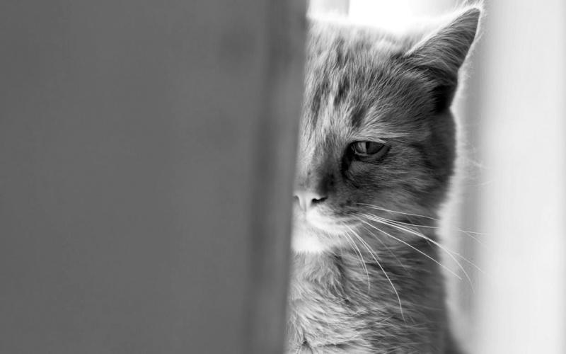 "Attentats/fusillades ""Bataclan"" - Page 4 Do-cat10"