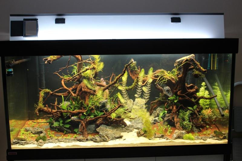 Mon aquarium 400 litres (vidéo page 5) - Page 3 Img_4410