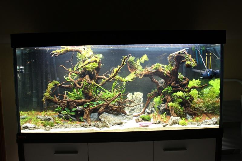 Mon aquarium 400 litres (vidéo page 5) - Page 3 Img_4515