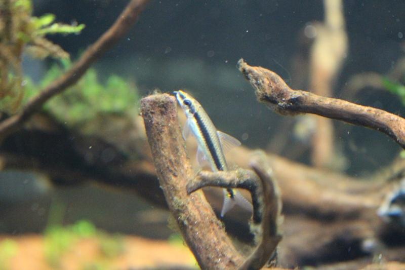 Mon aquarium 400 litres (vidéo page 5) - Page 3 Img_4516