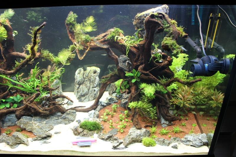 Mon aquarium 400 litres (vidéo page 5) - Page 3 Img_4519
