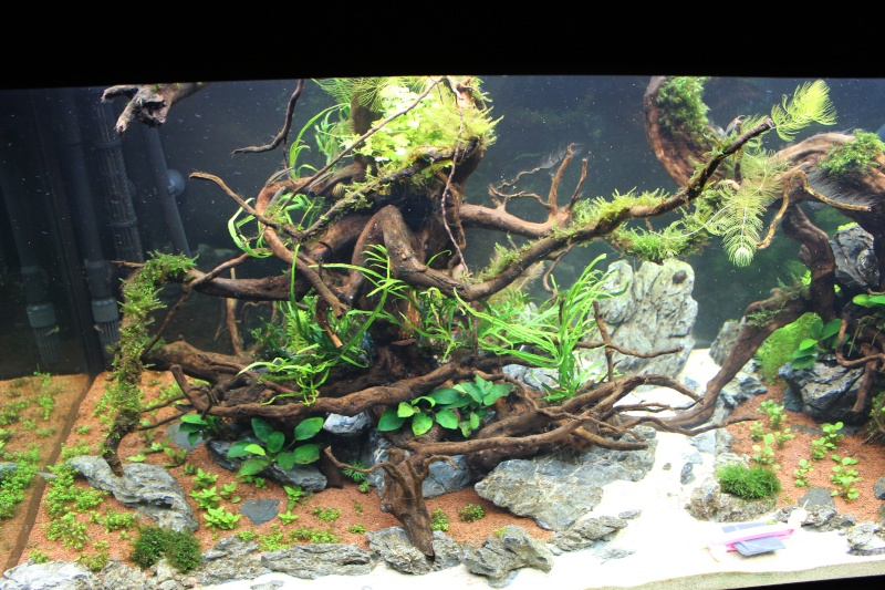 Mon aquarium 400 litres (vidéo page 5) - Page 3 Img_4520