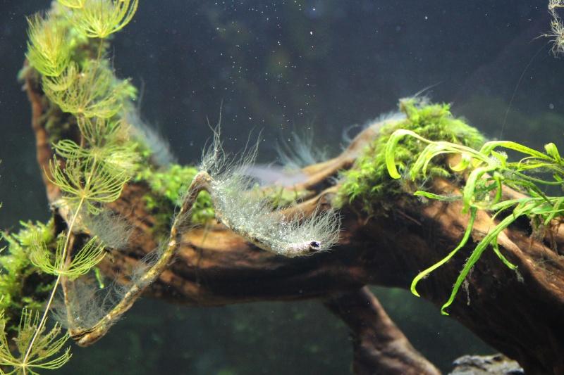 Mon aquarium 400 litres (vidéo page 5) - Page 4 Img_4522