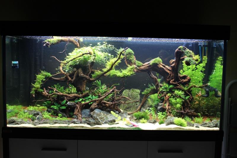 Mon aquarium 400 litres (vidéo page 5) - Page 4 Img_4523