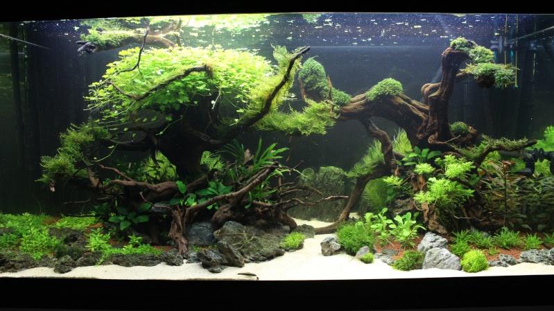 Mon aquarium 400 litres (vidéo page 5) - Page 4 Img_4815
