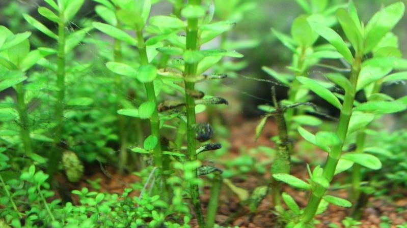 Plantes qui noircissent Img_4816