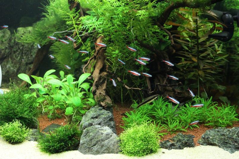 Mon aquarium 400 litres (vidéo page 5) - Page 5 Img_4911