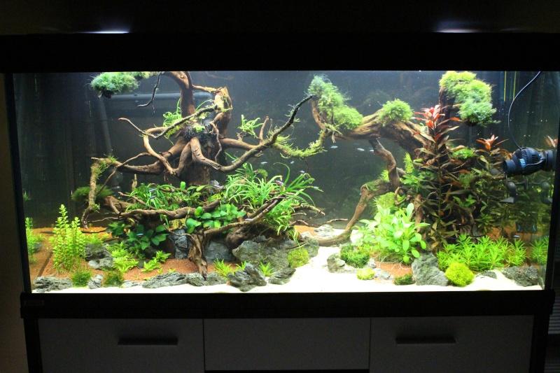 Mon aquarium 400 litres (vidéo page 5) - Page 6 Img_5015