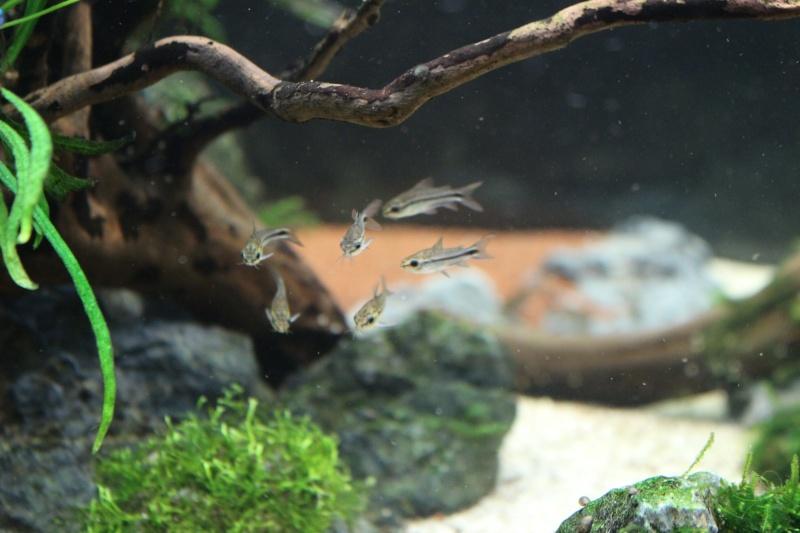 Mon aquarium 400 litres (vidéo page 5) - Page 6 Img_5016