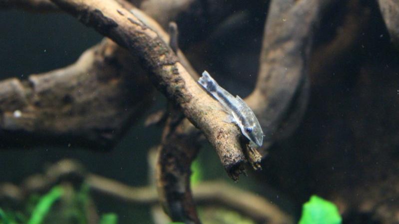 Mon aquarium 400 litres (vidéo page 5) - Page 6 Img_5017
