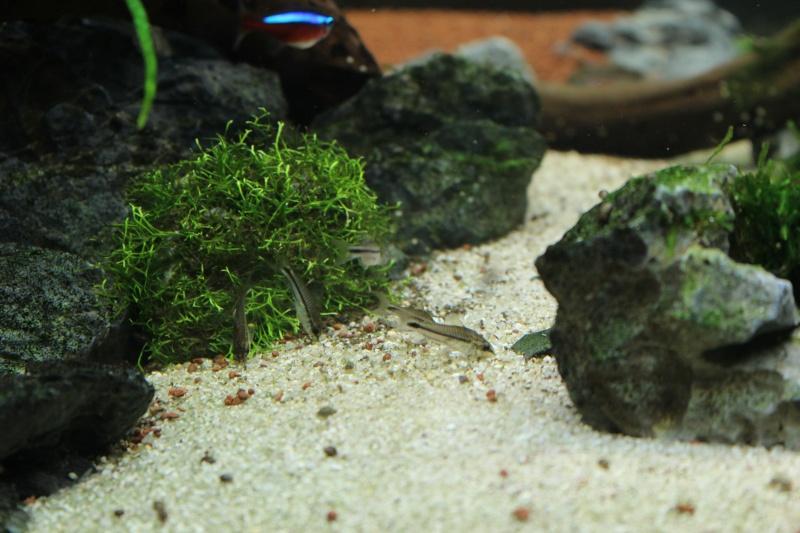 Mon aquarium 400 litres (vidéo page 5) - Page 6 Img_5018